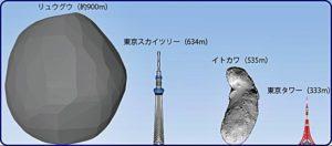 リュウオウの直径
