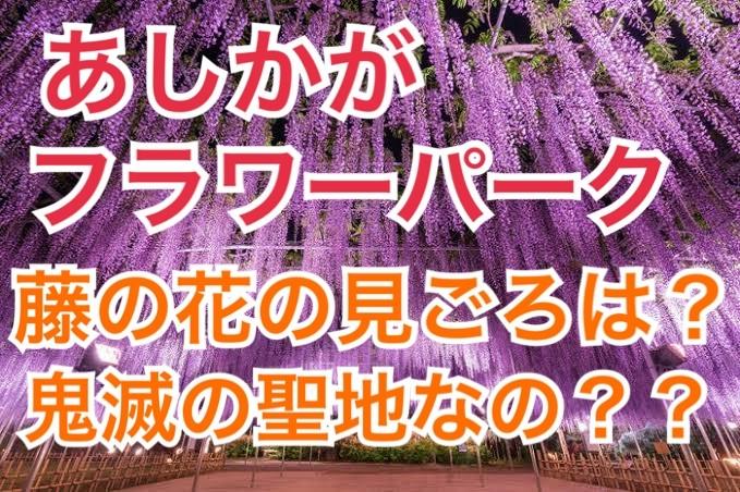 あしかがフラワーパークの藤の花の見頃は?鬼滅の刃聖地とそっくり?